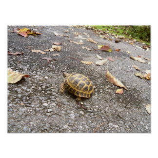 Tortoise on a Mission Animal Poster