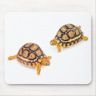 Tortoises Meeting Mouse Pad