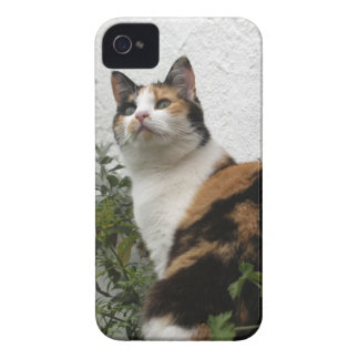 Tortoiseshell and White Cat iPhone 4 Covers
