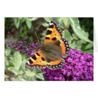 Tortoiseshell butterfly on budliea card