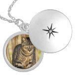 Tortoiseshell Cat Portrait, Closeup Animal Photo Round Locket Necklace