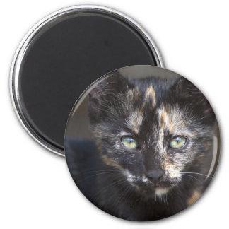 Tortoiseshell Kitten 6 Cm Round Magnet