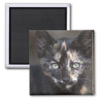 Tortoiseshell Kitten Square Magnet