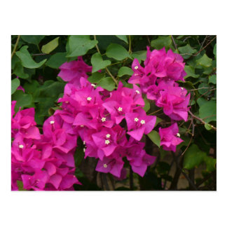 Tortola Flowers Postcard