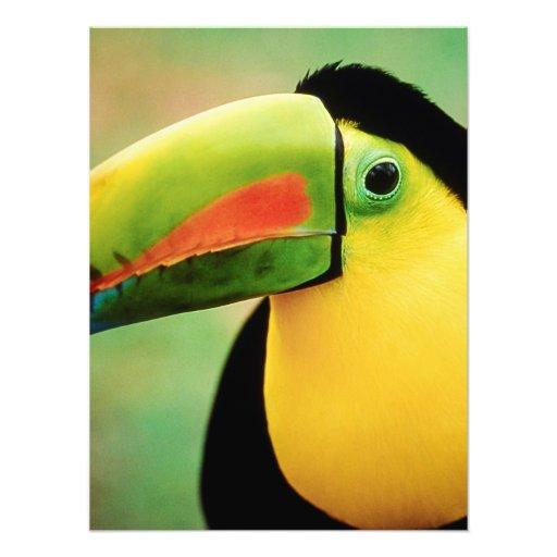 Toucan Bird Wild Nature Colorful Photography Photo Print