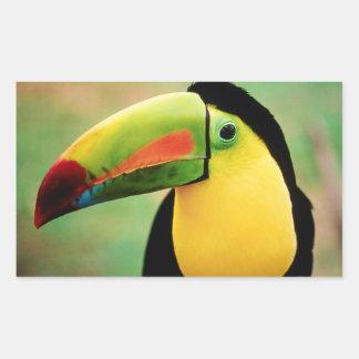 Toucan Bird Wild Nature Colorful Photography Rectangular Sticker