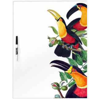 Toucan Birds Wildlife Animals Dry Erase Board