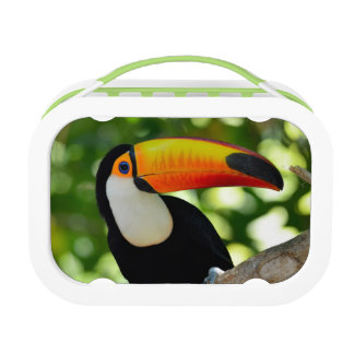 Toucan Lunch Box