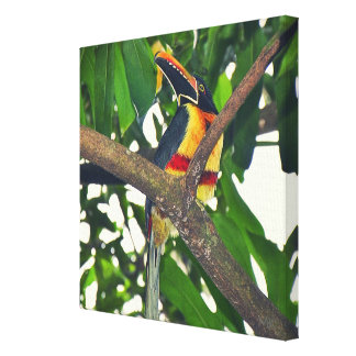 Toucan Photography on Canvas