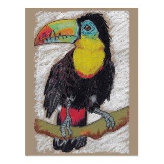 Toucan sketch postcard by Nicole Janes