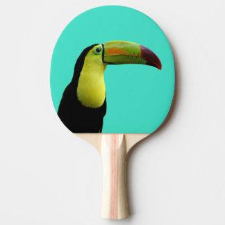 Toucan tropical animal colorful photo