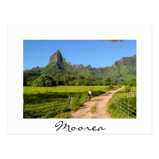 Tourist cycling on tropical Moorea white postcard