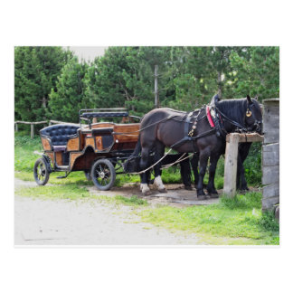 Touristic horse drawn calash postcard