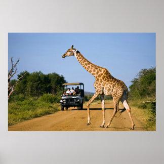 Tourists Watching Giraffe Poster