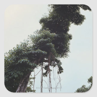 Towering tree and vines in jungle square stickers