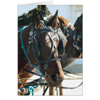 Town Hall Meeting Amish Buggy Horses Greeting Card