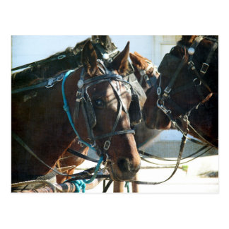 Town Hall Meeting Amish Buggy Horses Postcard