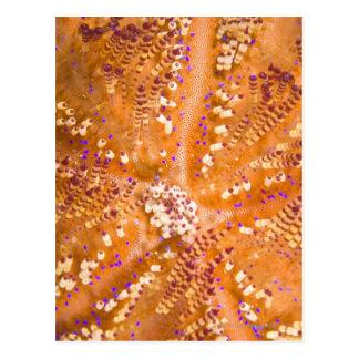 Toxic Fire Urchin (Asthenosoma varium) Postcard