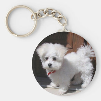 Toy Dogs Basic Round Button Key Ring