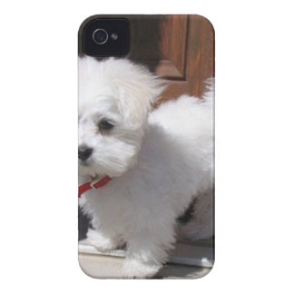 Toy Dogs iPhone 4 Case-Mate Case