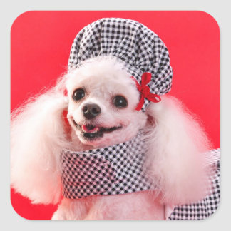 Toy Poodle in Hat & Dress Square Sticker