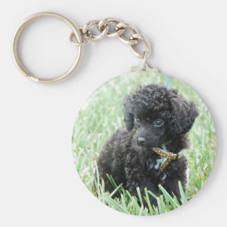 Toy Poodle Puppy Basic Round Button Key Ring