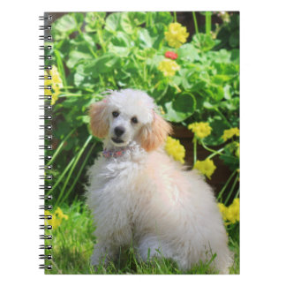 Toy poodle puppy journal spiral notebooks