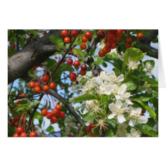 Toyon Berries and Blossoms Greeting Card_customize Cards
