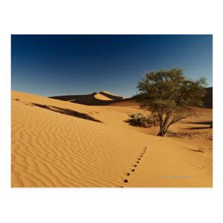 tracks in desert landscape of Namib at Postcard