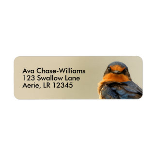 Trading Stares with a Barn Swallow Return Address Label