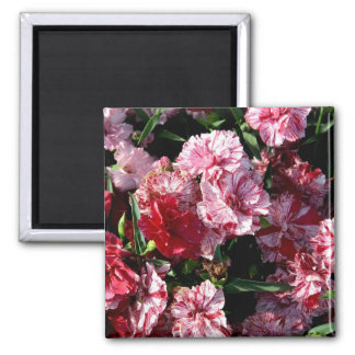 Traditional Wedding Carnations Square Magnet