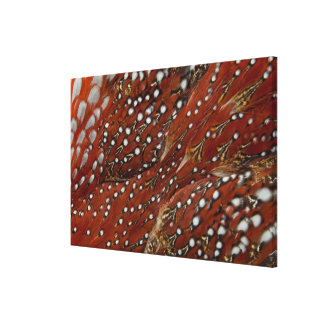 Tragopan Breast Feathers Detail Canvas Print