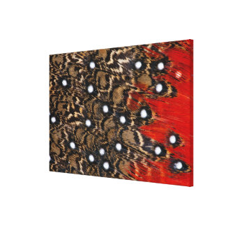 Tragopan Feathers Abstract Canvas Print