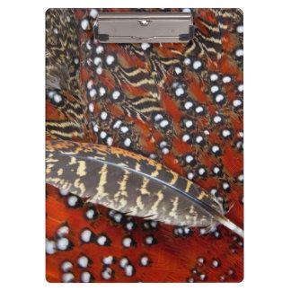Tragopan feathers close-up clipboard