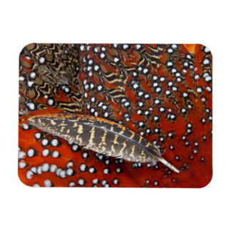 Tragopan feathers close-up magnet