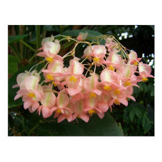 Trailing Begonia Postcard