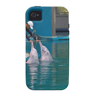 Trainer patting the dolphin during the show iPhone 4 cover