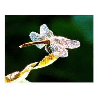 Transparent dragonfly postcard