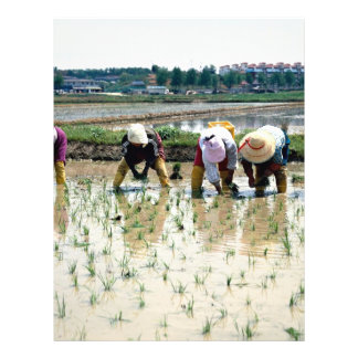 Transplanting young rice plants flyer