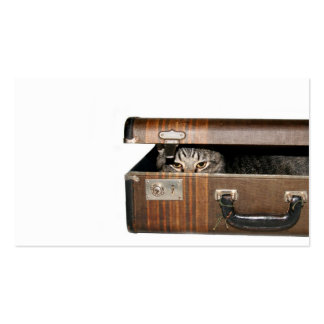 Traveling cat business card