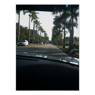 Traveling Through the Florida Palm Trees Print