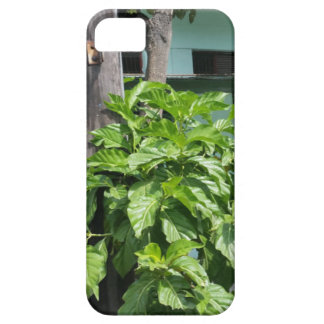 Treasure nostalgia today in Cuba telephone booth iPhone 5 Covers