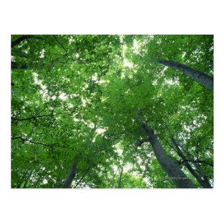 Tree 7 postcard