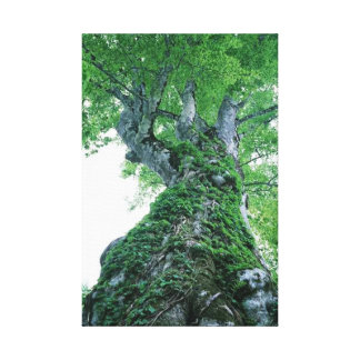 Tree 89  Stretched Canvas Print