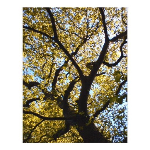 Tree against blue sky. personalized flyer