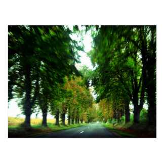 Tree alley in Hungary Postcard