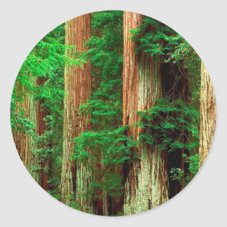 Tree Ancient Giants Redwoods Round Sticker