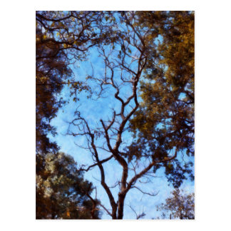 Tree and blue sky postcard