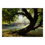 Tree and Bridge in Central Park Posters