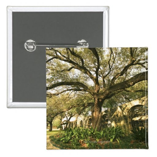 Tree and landscaping in San Antonio, Texas Pinback Button